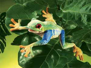 Red Eyed Tree Frog Hand Puppet  |  Folkmanis