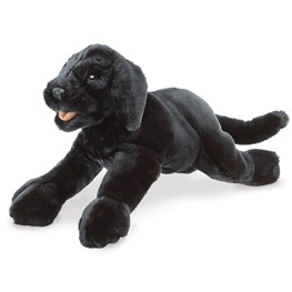 Labrador Puppy, Black