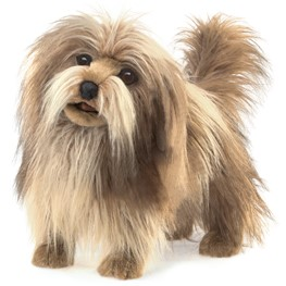 Dog, Shaggy